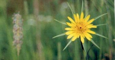 Lone Yellow Wildflower
