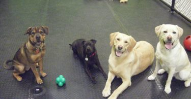 Dogs at Canine Comforts