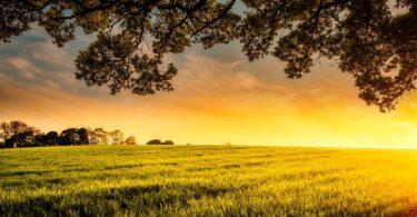 Sun Setting on Farm Field