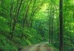 Trail thru woods