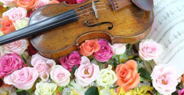 Violin in Roses