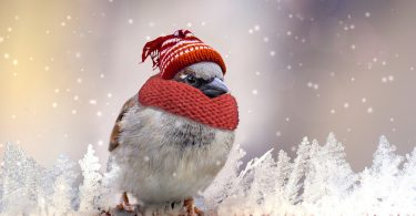 Sparrow in hat and scarf