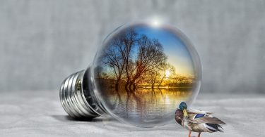 Lightbulb with Lake Scene